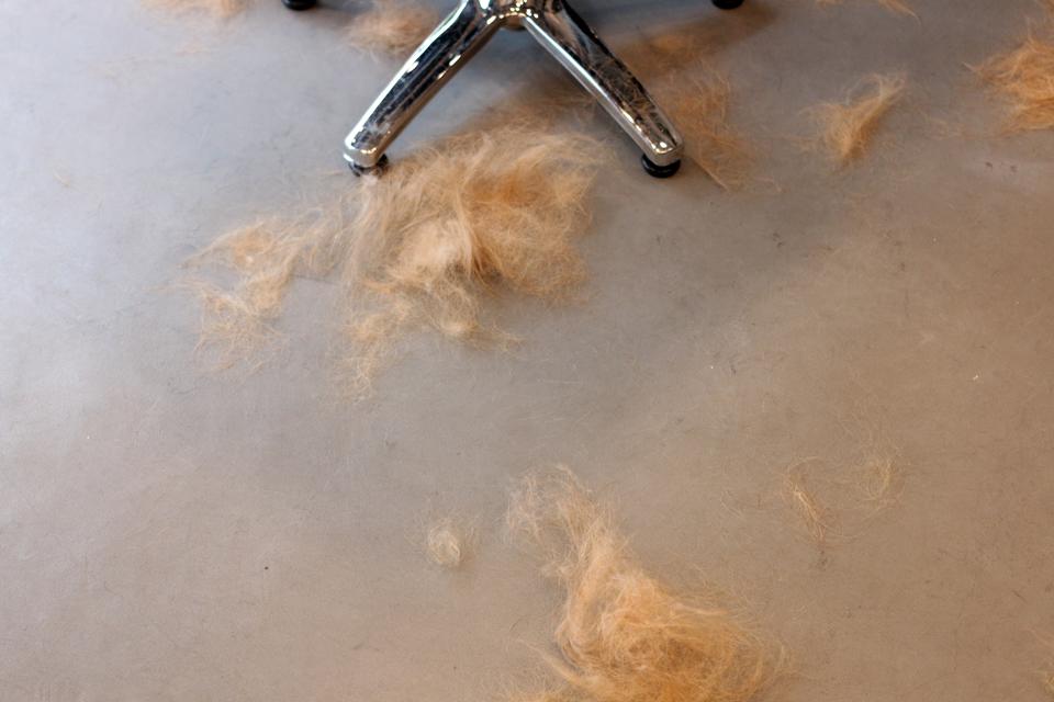 プラッキングした毛